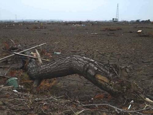 仙台沿岸津波5.JPG